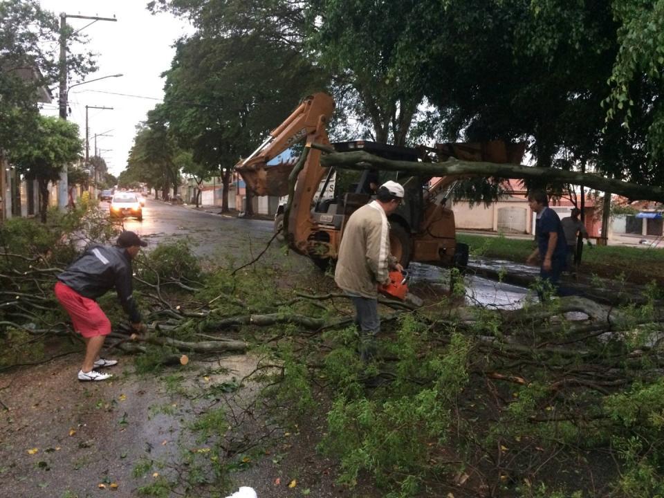 Doze árvores caíram com temporal de terça-feira