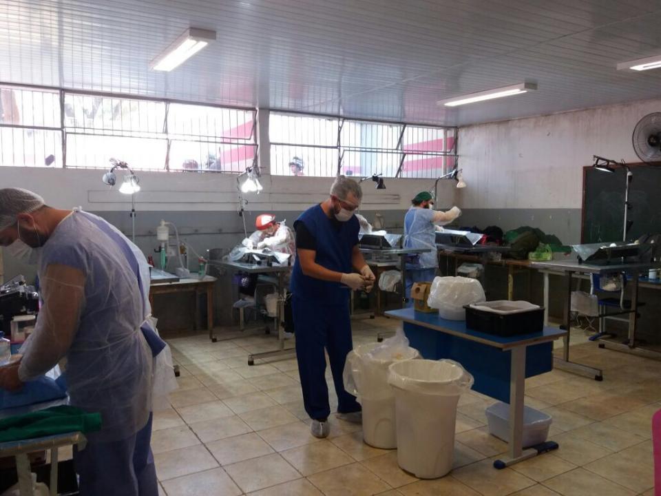 MUTIRÃO DE CASTRAÇÃO ATENDE 239 ANIMAIS