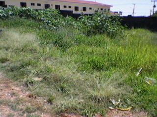 Fiscalização notifica donos de terrenos com mato e de calçadas sem condições de trânsito